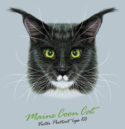 main: Vector Portrait of Maine Coon. Cute bi-color domestic cat with green eyes. Illustration