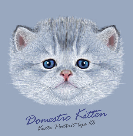 Vector Portrait of Domestic Kitten. Cute silver kitten with blue eyes.