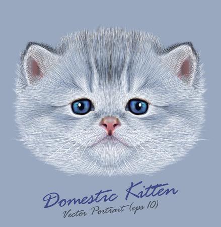 kitten: Vector Portrait of Domestic Kitten. Cute silver kitten with blue eyes.