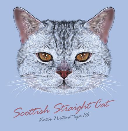 Vector Portrait of Scottish Straight Cat. Cute Tabby Domestic Cat with orange eyes. 일러스트