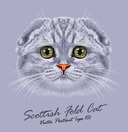 Vector portrait de Scottish Fold Cat. Mignon jeune chat gris aux yeux verts. Illustration