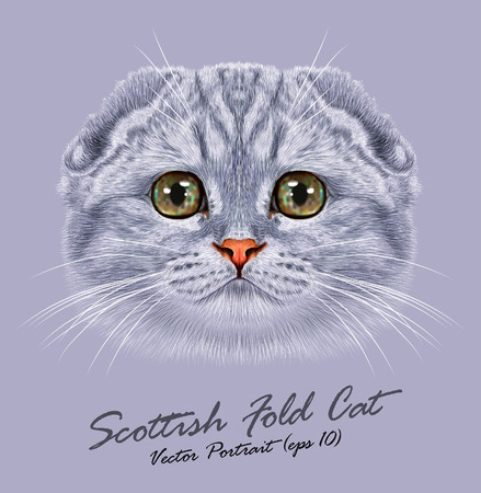 Vector Portrait of Scottish Fold Cat. Cute young grey cat with green eyes. Ilustração