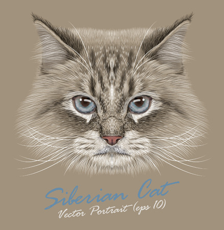 Vector Portrait of Siberian Cat. Cute color-point semi-long hair cat with blue eyes.