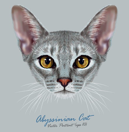 Vector Illustrative Portrait of Abyssinian Cat. Cute breed of domestic short haired cat with a distinctive Blue ticked tabby coat and with Yellow eyes.