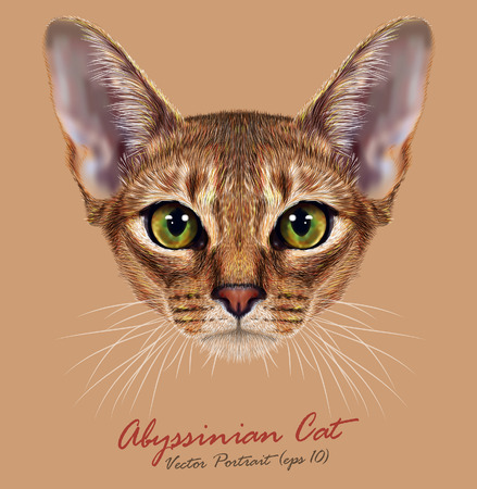 short haired: Vector Illustrative Portrait of Abyssinian Cat. Cute breed of domestic short haired cat with a distinctive ruddy ticked tabby coat and with green eyes. Illustration