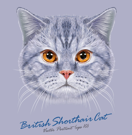 Vector Portrait of British Short-hair Cat. Cute grey domestic cat with orange eyes. Çizim