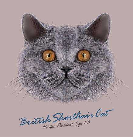 Vector Portrait of British Shorhair Cat. Cute silver domestic cat with orange eyes.