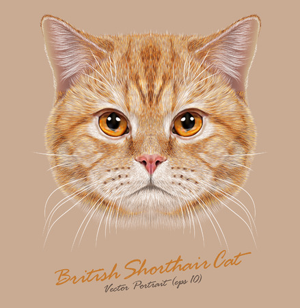 Vector Portrait of Domestic Cat. Orange British Short hair cat with copper eyes. Zdjęcie Seryjne - 44284279