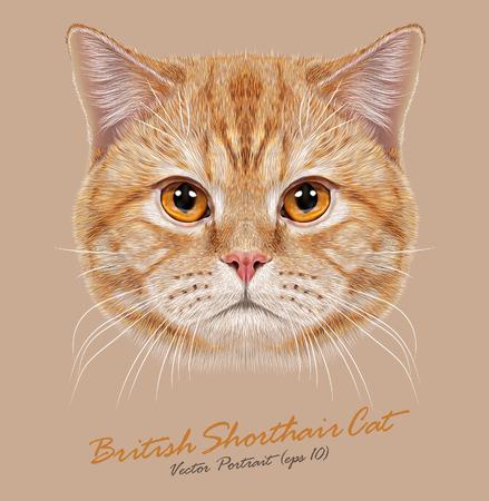 Vector Portret van Binnenlandse Kat. Oranje Britse Kort haar kat met koperen ogen.