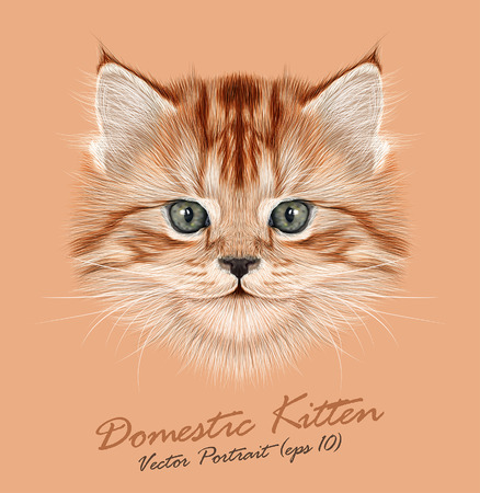Vector Illustrative Portrait of Domestic Kitten. Cute red tabby kitten. Illustration