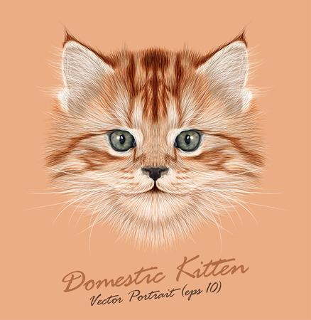 Vector Illustrative Portrait of Domestic Kitten. Cute red tabby kitten. Vectores