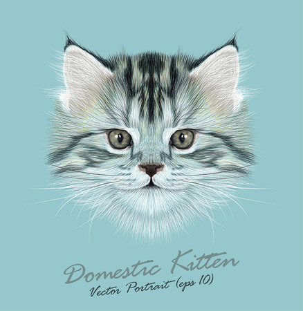 Vector Illustrative Portrait of Domestic Kitten. Cute grey tabby kitten.