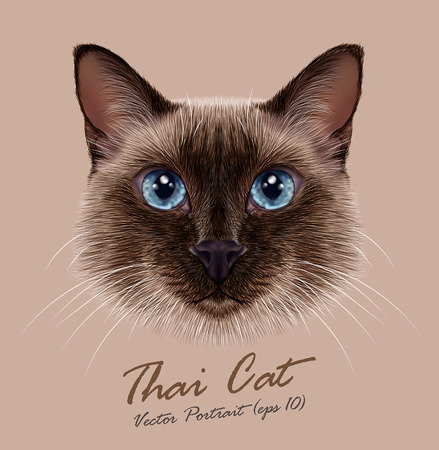 cat illustration: Vector Illustrative Portrait of a Thai Cat. Cute seal point Traditional Siamese Cat.