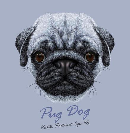 Vector Portrait of Pug Dog. Cute young dog on blue background. Illustration
