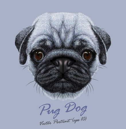 brown and black dog face: Vector Portrait of Pug Dog. Cute young dog on blue background. Illustration