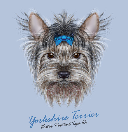 domestic: Vector Portrait of a Domestic Dog. Cute head of Yorkshire Terrier on blue background.