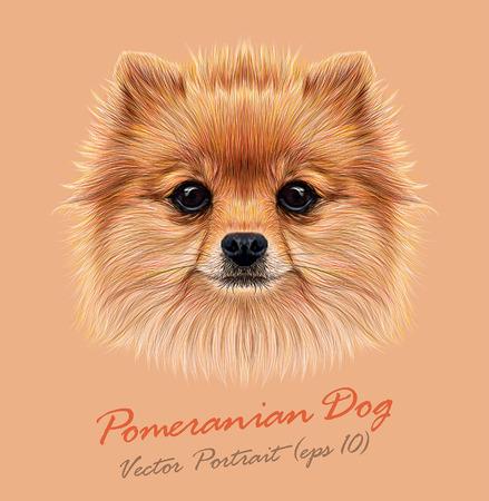 Vector Illustrative Portrait of Pom Pom. Cute head of a sable Pomeranian Spitz Dog.