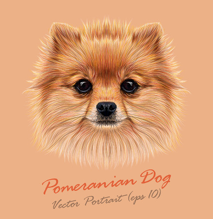 Vector Illustrative Portrait of Pom Pom. Cute head of a sable Pomeranian Spitz Dog.