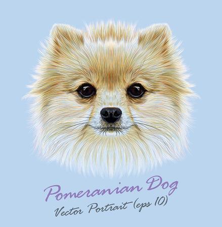 Vector Illustrative Portrait of Pom Pom. Cute head of a white Pomeranian Spitz Dog.