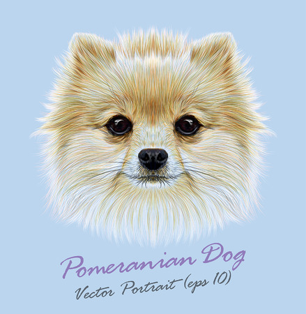 Vector Illustrative Portrait of Pom Pom. Cute head of a white Pomeranian Spitz Dog.