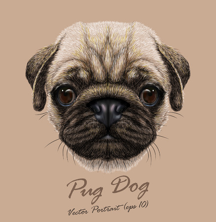 brown and black dog face: Vector Portrait of Pug Dog. Cute young dog.