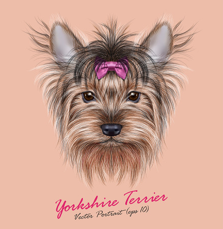 Vector Portrait of a Domestic Dog. Cute head of Yorkshire Terrier on ping background. 일러스트
