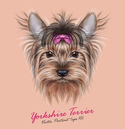 Vector Retrato de un perro doméstico. Lindo jefe de Yorkshire Terrier en el tenis de fondo. Foto de archivo - 44304491