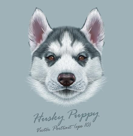 ハスキーの子犬のベクトル イラスト肖像画。茶色の目で若い灰色の二色犬のかわいい肖像画。  イラスト・ベクター素材