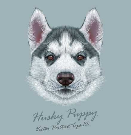 olhos castanhos: Vector Illustrative Portrait of Husky Puppy. Cute portrait of young gray bicolor dog with brown eyes.