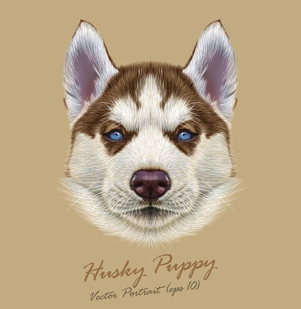 Vector Illustrative Portrait of Husky Puppy. Cute portrait of young copper red bicolor dog with pale blue eyes.