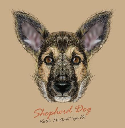 シェパード犬のベクトルの肖像。コートの伝統的な色のかわいい子犬。  イラスト・ベクター素材