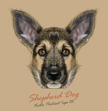 Vector Portrait of Shepherd Dog. Cute Puppy with traditional color of coat. Illustration