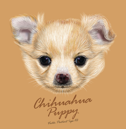 Vector Illustrative Portrait of Chihuahua Puppy. Cute white puppy with apricot spots on skin.