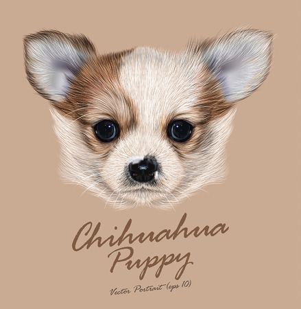 Vector Illustrative Portrait of Chihuahua Puppy. Cute long hair bi-color Puppy.