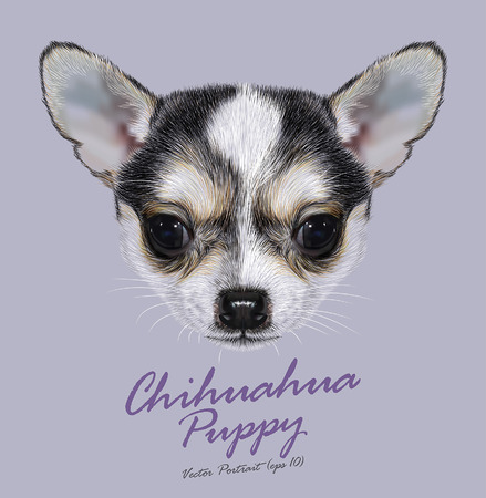 portrait: Vector Illustrative Portrait of Chihuahua Puppy. Cute bi-color little dog black white.