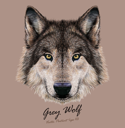Digital vector Illustration Portrait of a Wolf. Dark grey fur color.