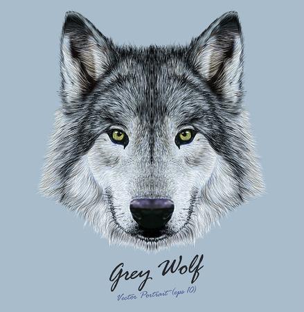 オオカミのベクトル イラスト肖像画。緑の目で灰色オオカミの美しい注視の顔。