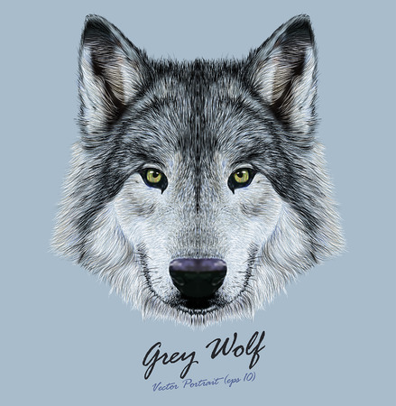 Vector Illustrative Portrait of Wolf. Beautiful gazing face of Gray Wolf with green eyes.
