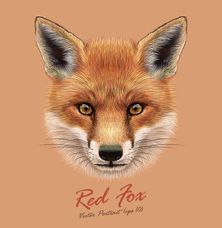 赤狐のベクトル イラスト肖像画。フォックスの森のふわふわかわいい顔。  イラスト・ベクター素材