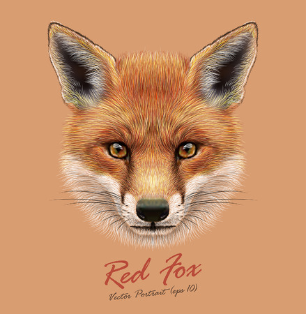 Vector Illustrative Portrait of a Red Fox. The cute fluffy face of forest Fox. Vettoriali