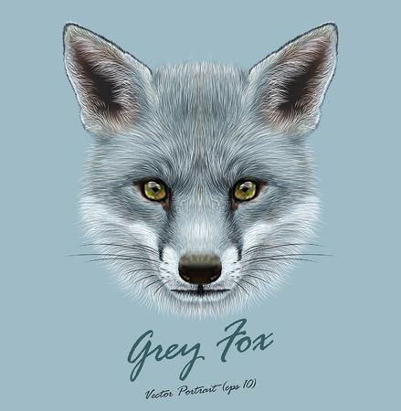 그레이 폭스의 벡터 예시 초상화. 코트의 실버 색상과 폭스의 귀여운 얼굴.