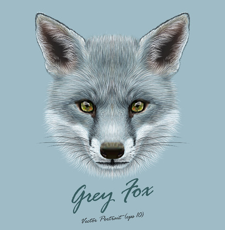 Vector Illustrative portrait of Grey Fox. Cute face of Fox with silver color of coat. Иллюстрация