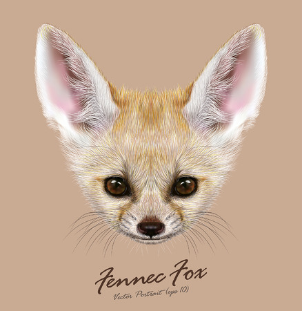 Vector Illustrative portrait of Fennec Fox. Cute face of special African Fox. Illustration
