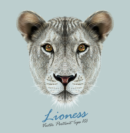 carnivore: Vector Portrait of a Lioness on Blue background. Cute and beautiful big cat face.
