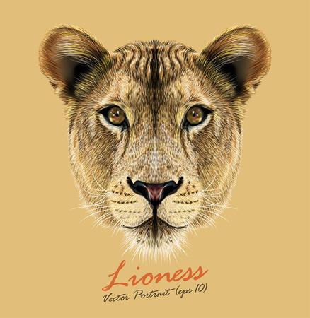 lion dessin: Vector portrait d'une lionne. Grand visage de chat mignon et beau. Illustration