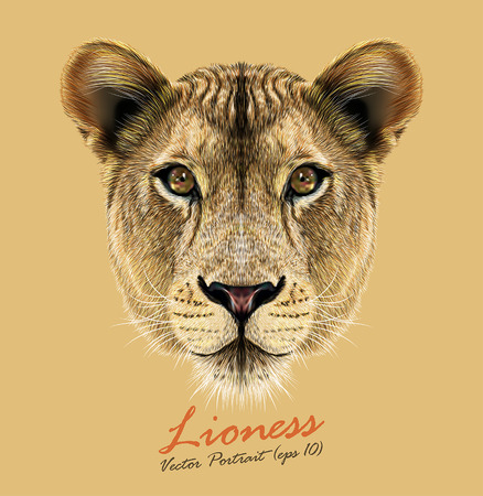 Vector Portrait of a Lioness. Cute and beautiful big cat face.