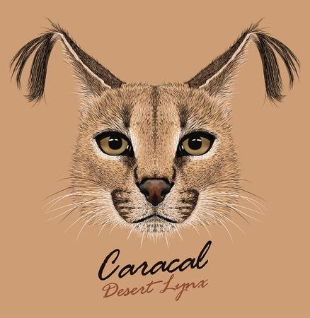 Vector portrait of wild cat.Caracal