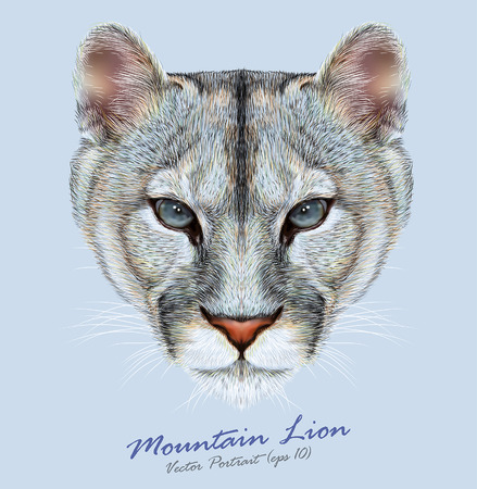 Vector Portrait of a Mountain Lion on Blue background. Cuguar Cat. Ilustração
