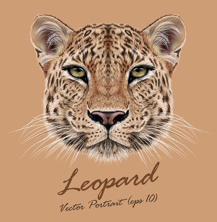 Vector Illustrative Portrait of Leopard. Cute face of African Leopard
