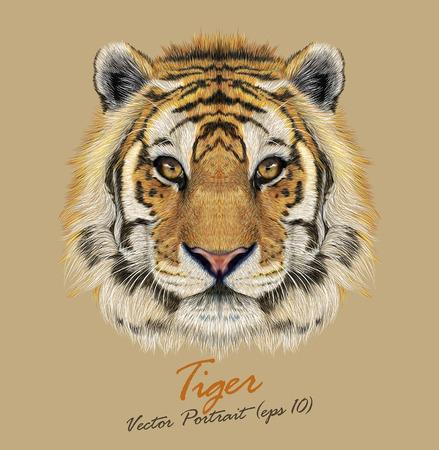 animaux: Vector portrait d'un tigre. Beau visage de grand chat. Illustration